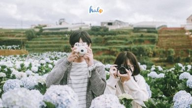 Photo of 'Mê mẩn' 10 vườn hoa Đà Lạt nức tiếng đẹp ngây ngất nhất định phải ghé
