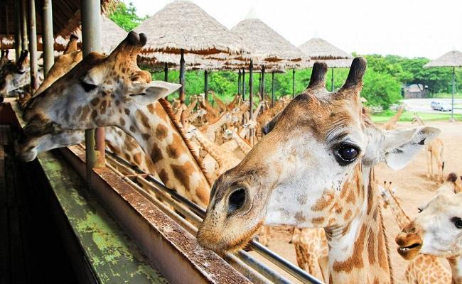 bangkok_safari-1