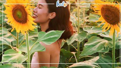 """Photo of """"Tan chảy"""" với vườn hoa hướng dương gần Hà Nội vàng tươi"""
