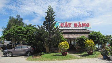phanthiet_quan-cay-bang-mui-ne-01