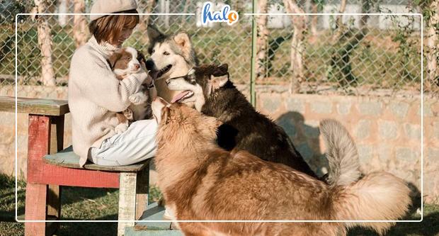 """Photo of Đến Black Rock Garden Đà Lạt """"tan chảy con tim"""" với mấy em cún xinh đẹp"""