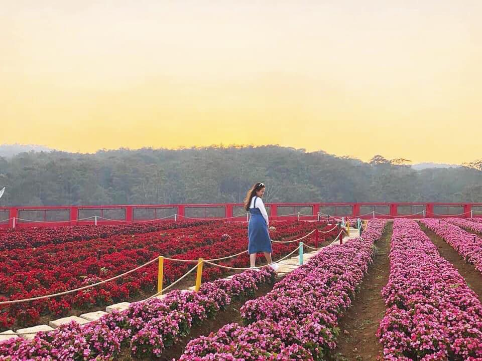 dalat_fresh-garden-da-lat-01