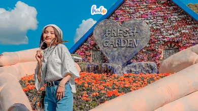 Photo of 'Bấm máy mỏi tay' ở Fresh Garden Đà Lạt – vườn hoa siêu to khổng lồ