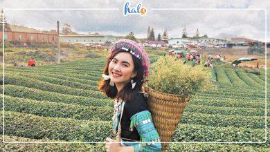 """Photo of Khách sạn tốt ở Mộc Châu đẹp đến """"điêu đứng"""""""