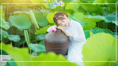 """Photo of Top 5 ĐẦM SEN QUANH Hà Nội đang vào mùa nở rộ """"đẹp xao xuyến"""""""