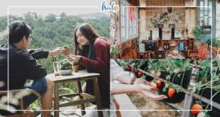 dalat_quan-cafe-goi-tinh