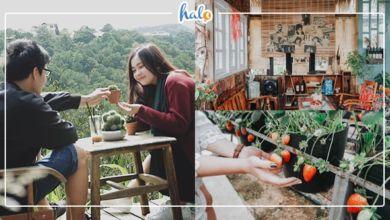 """Photo of TOP quán cafe """"sống ảo"""" ở Đà Lạt dành cho các tín đồ yêu mưa"""