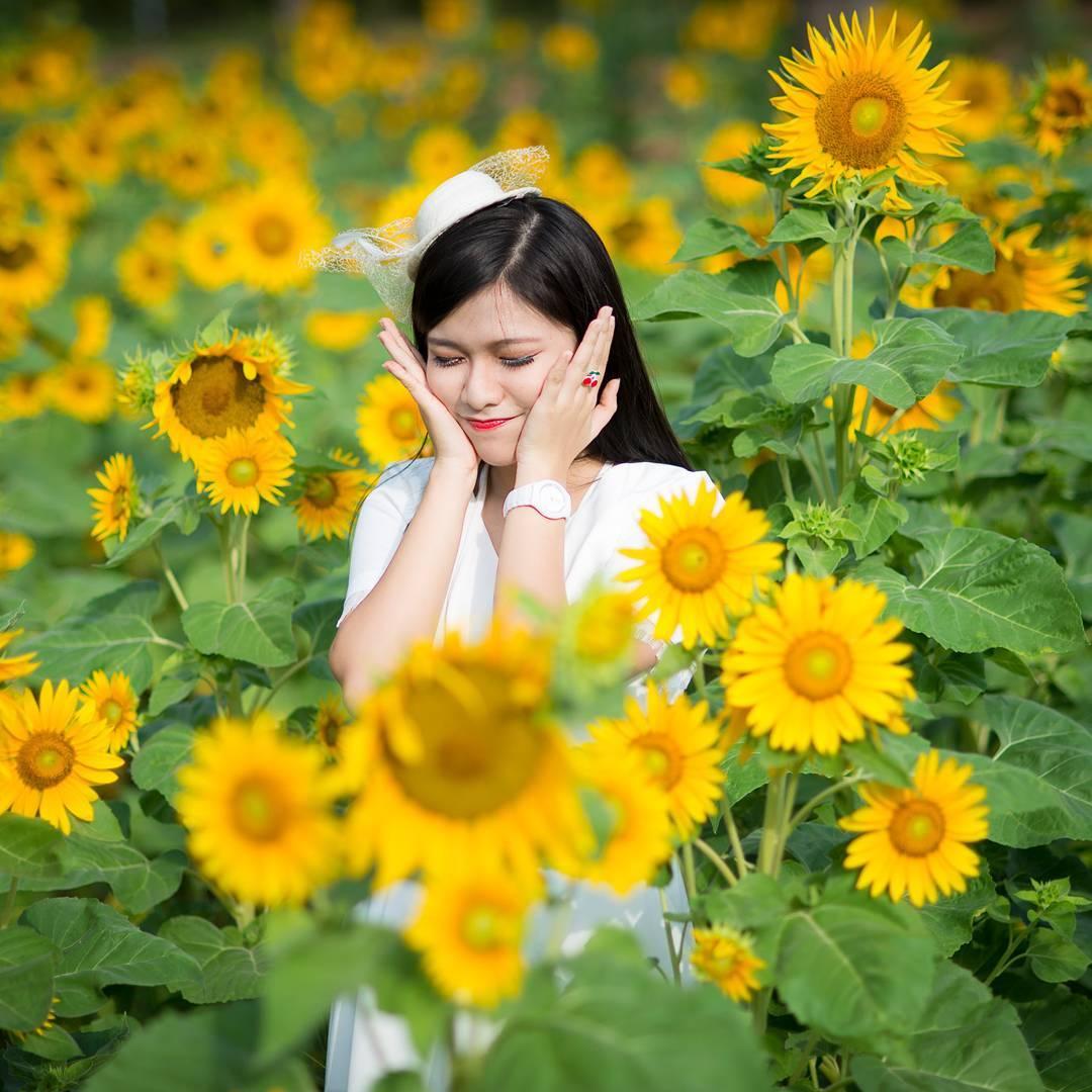 vietnam_12-canh-dong-hoa-huong-duong-dep-nhat-viet-nam-07