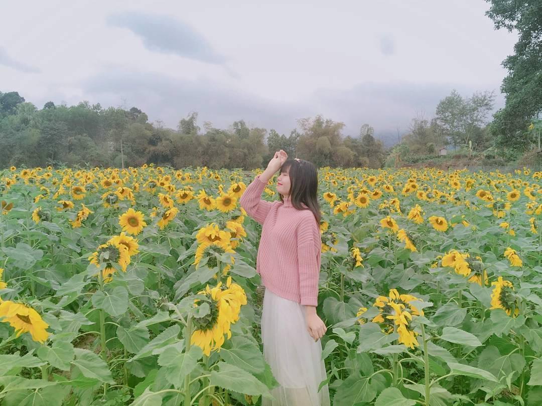 vietnam_12-canh-dong-hoa-huong-duong-dep-nhat-viet-nam-16