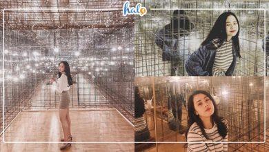 Photo of Đến Ma's Milktea & Gelato ngắm RỪNG MƯA SAO BĂNG đẹp tựa phim ở Đà Lạt