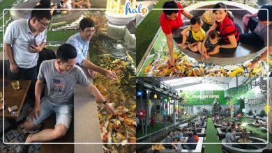 """Photo of LẠ: """"Ngồi dưới nước"""" thưởng thức cà phê và ngắm cá Koi ở Sài Gòn"""