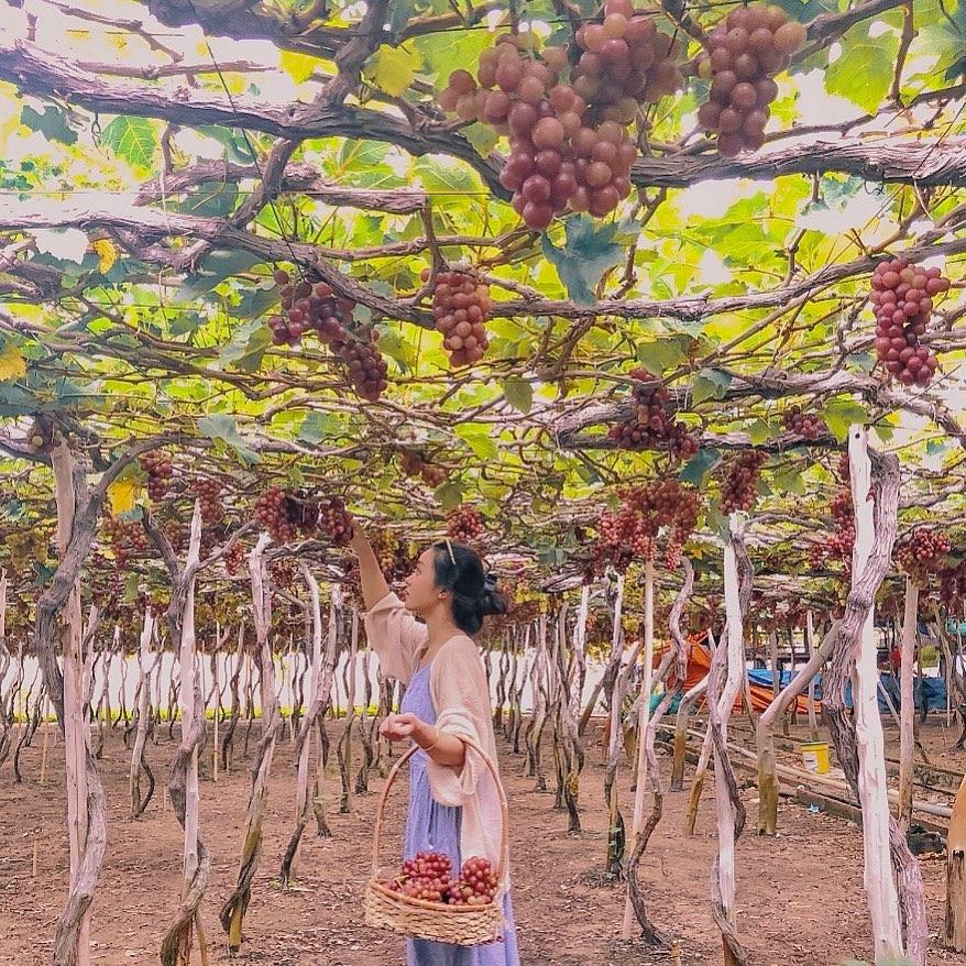 Ninh-thuan-vuon-nho-thai-an-21