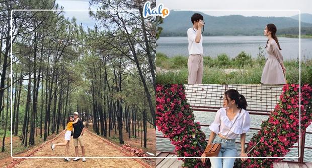 Photo of Kéo người thương đi Picnic ngắm rừng thông bạt ngàn gần Hà Nội