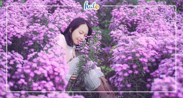 Photo of Lộ diện CÁNH ĐỒNG HOA THẠCH THẢO tím rực ở Đà Lạt, FREE VÉ VÀO CỬA
