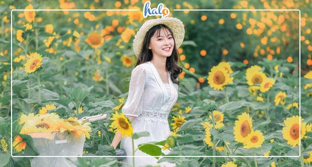 Photo of Săn tìm gấp hoa hướng dương nở rộ ở vườn hoa bãi đá sông Hồng