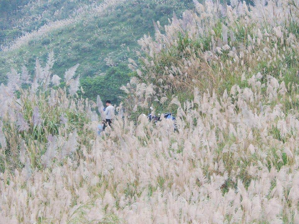 Địa chỉ đi chơi gần Hà nội ngắm đồng cỏ lau