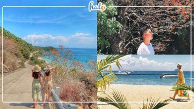 Photo of Ngẩn ngơ mùa HOA NGÔ ĐỒNG nhuộm đỏ rực biển đảo Cù Lao Chàm