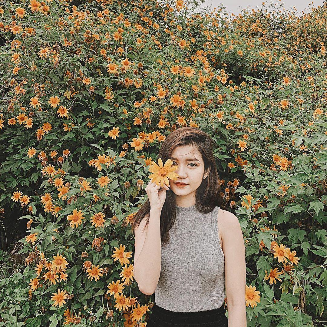 địa điểm vui chơi gần Hà Nội ngắm hoa dã quỳ