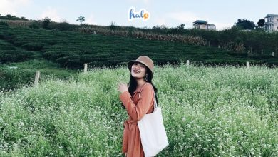 Photo of 'Choáng ngợp' 5 cánh đồng hoa cải Mộc Châu đẹp tựa thiên đường