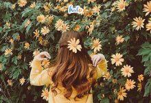Photo of Lưu gấp tọa độ ngắm hoa dã quỳ Ba vì nở rộ, cứ ngỡ như ở Đà Lạt