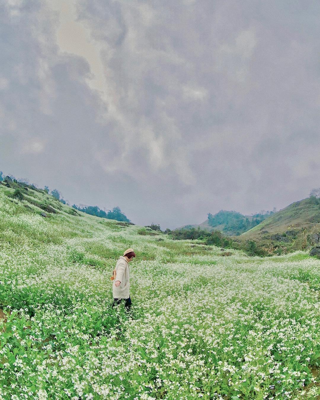 mocchau_diem-san-hoa-cai-trang-moc-chau-4