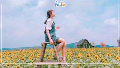 bacgiang_vuon-hoa-huong-duong-bac-giang
