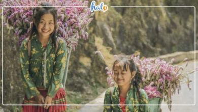 """Photo of Hà Giang 5 ngày 4 đêm: Khám phá MÙA VÀNG HÀ GIANG """"cực tình"""""""