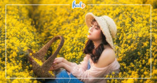 hanoi_vuon-hoa-cuc-chi-hung-yen