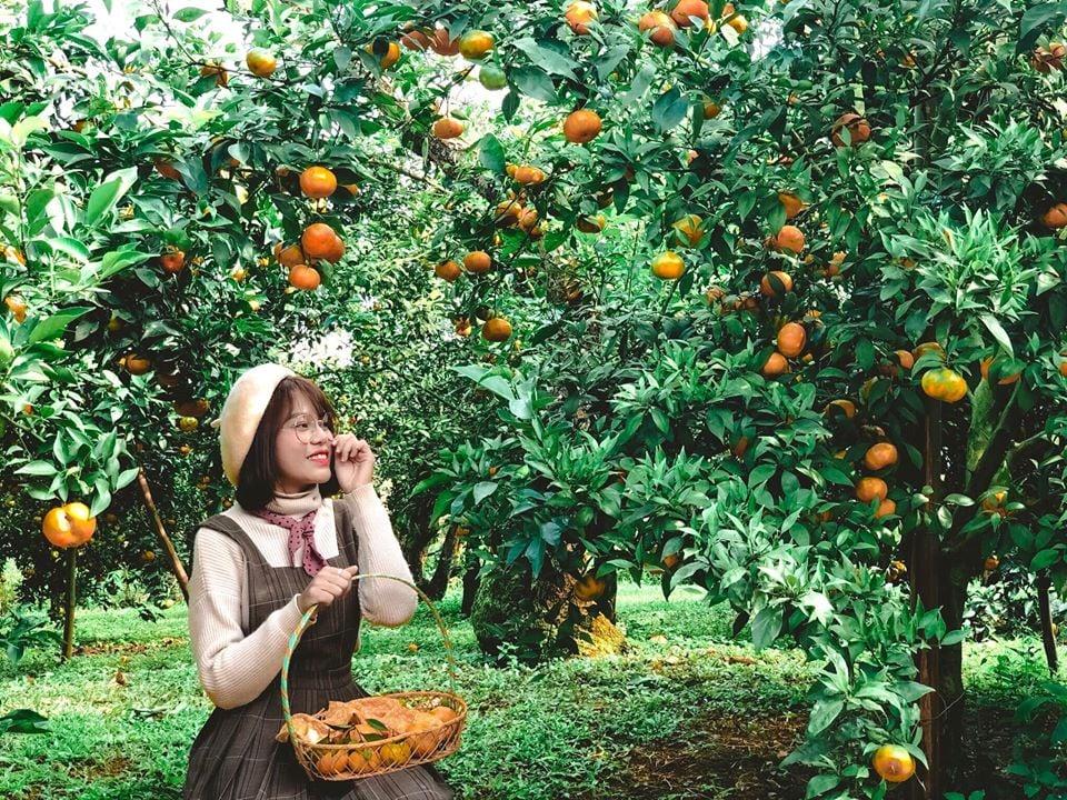 mocchau_vuon-quyt-chimi-farm-4