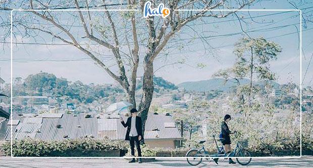 """Photo of """"Ngỡ ngàng"""" vẻ đẹp HOA BAN nở trắng trời Đà Lạt"""