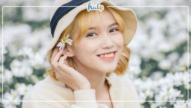 """Photo of Không chỉ Hà Nội, Đà Nẵng cũng có VƯỜN CÚC HỌA MI đẹp """"ngất ngây"""""""