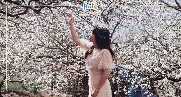 Photo of Top địa điểm chụp hoa mận Mộc Châu nở rộ đón xuân về