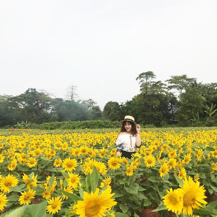 an-giang-vuon-huong-duong-an-giang-10