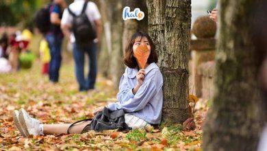 Photo of Phát hiện CON ĐƯỜNG TÌNH YÊU đẹp tựa Hàn Quốc mùa lá vàng