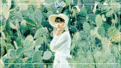 Photo of Phát hiện Cánh đồng xương rồng Đà Nẵng đẹp tựa phim Hàn