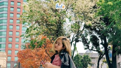 hanoi_hoa-sua-trang-ha-noi