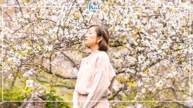 Photo of Kinh nghiệm đi Mộc Châu tự túc mùa hoa nở đẹp ngút ngàn