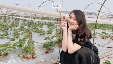 Photo of CHIMI FARM Hà Nội mang VƯỜN DÂU MỘC CHÂU về thủ đô