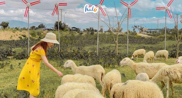Photo of Kinh nghiệm đi đồng cừu suối Tiên: địa điểm checkin mới 'CỰC HOT'