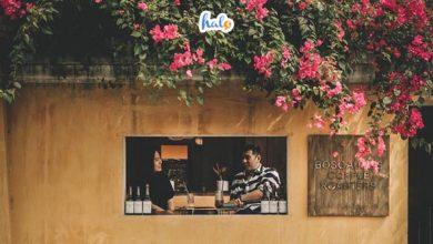 Photo of Dấu ấn tháng 3, mùa hoa giấy Hội An đua nhau khoe sắc