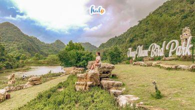 Photo of Vườn chim Thung Nham Ninh Bình: Thiên nhiên kỳ vĩ của miền Bắc