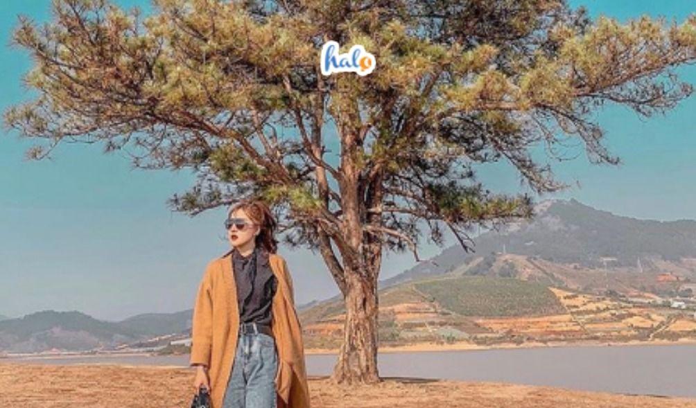 Photo of 'SĂN LÙNG' 8 cây cô đơn sống ảo dọc Việt Nam được giới trẻ yêu thích nhất