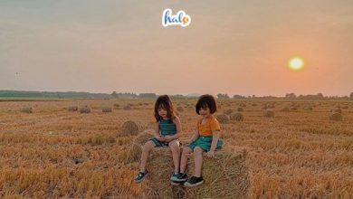 Photo of Sống ảo đẹp mê ly tại cánh đồng rơm gần sát Sài Gòn
