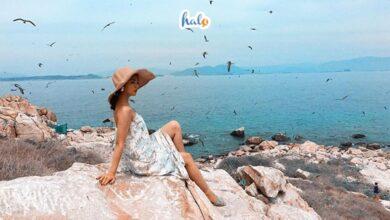Photo of Tổng hợp [trọn bộ kinh nghiệm] du lịch Đảo Yến Hòn Nội Nha Trang