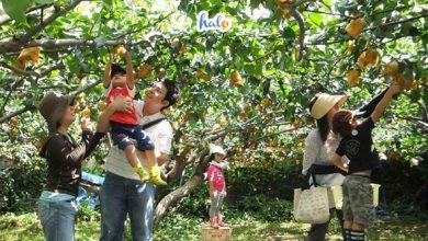 Photo of Top 6 vườn trái cây gần Sài Gòn nổi tiếng nhất