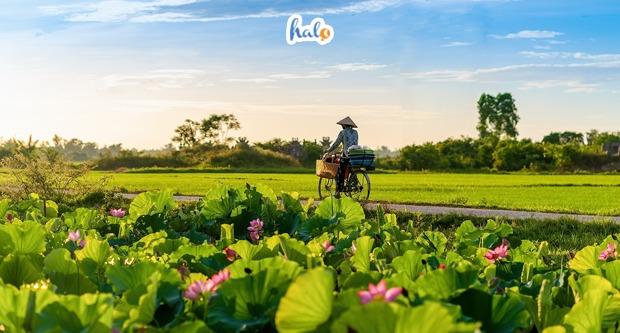 Photo of Liêu xiêu trước MÙA HOA SEN NỞ 'đẹp nao lòng' ở Huế