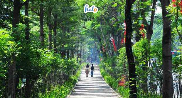 Photo of Ngỡ ngàng màn 'lột xác' cực thơ của đường cây xanh Thái Hà giữa thủ đô