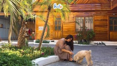 Photo of Lưu gấp những khách sạn Cô Tô gần biển view cực đỉnh