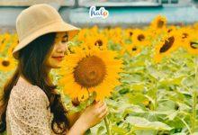 Photo of Kéo 'phó nháy' checkin cánh đồng hoa hướng dương Ninh Bình cực thơ