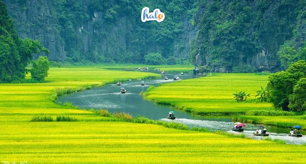 Photo of Ngẩn ngơ trước vẻ đẹp của mùa lúa chín Ninh Bình